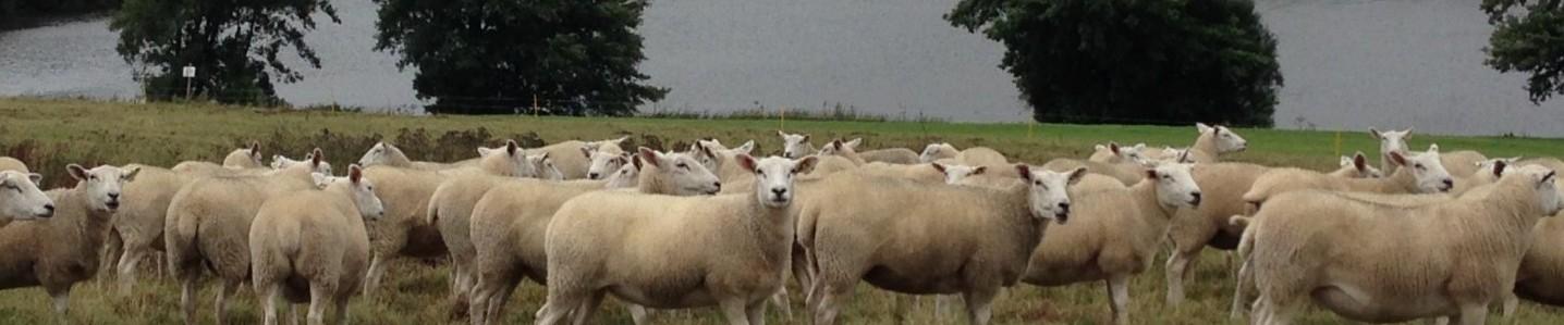 Fletcher's Flock